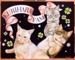 プレゼント用ボード、猫さん!